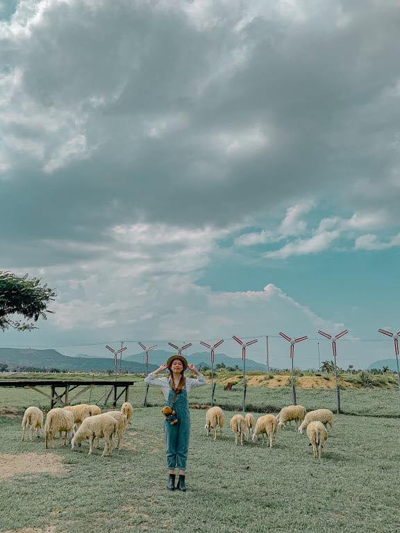 Đồng cừu Suối Tiên: ở đâu, giá vé, review chi tiết kinh nghiệm tham quan