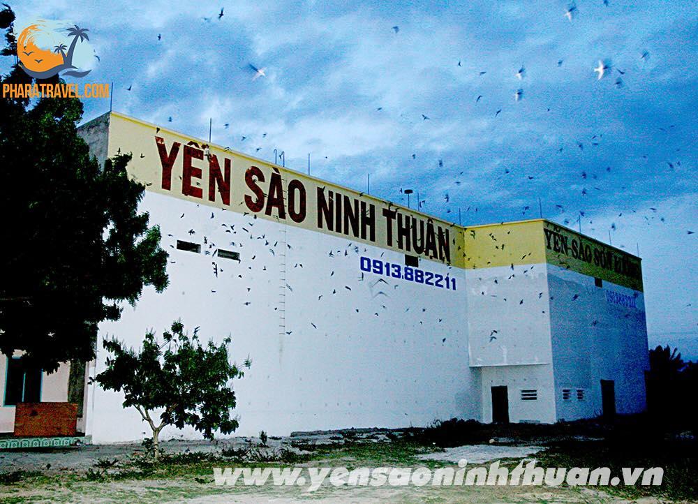 Yến Sào Ninh Thuận - vượt xa so với các vùng miền khác tại Việt Nam